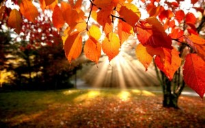 how to achieve goals and gain clarity like sunlight through trees